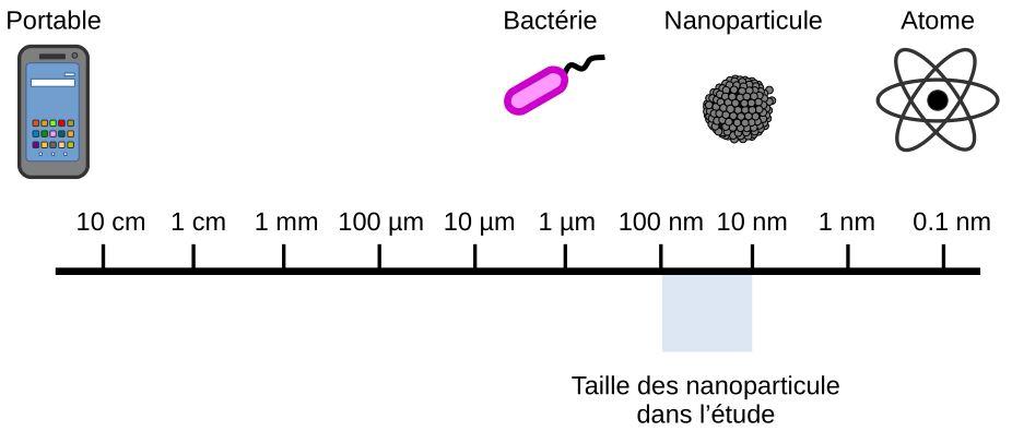 Comparaison de la taille des nanoparticules avec d'autres objets.